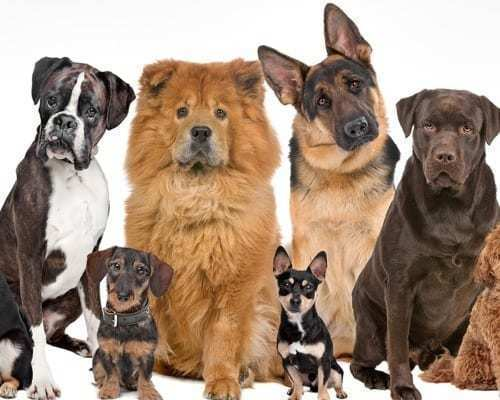 group of dogs preparing for pictorial